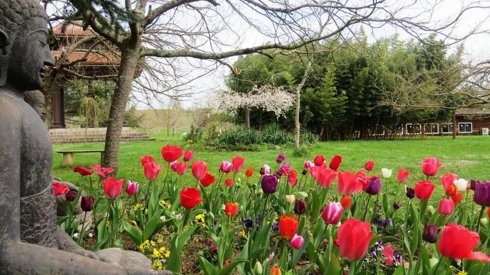 plum-village-spring